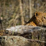 1-My-eyes (Kabini fever)
